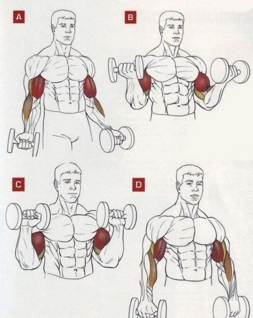 Эффективные упражнение на плечи в картинках