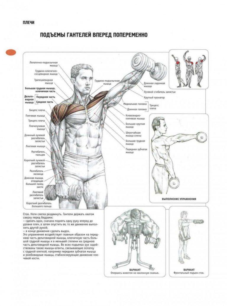 Упражнения на плечи с гантелями картинки